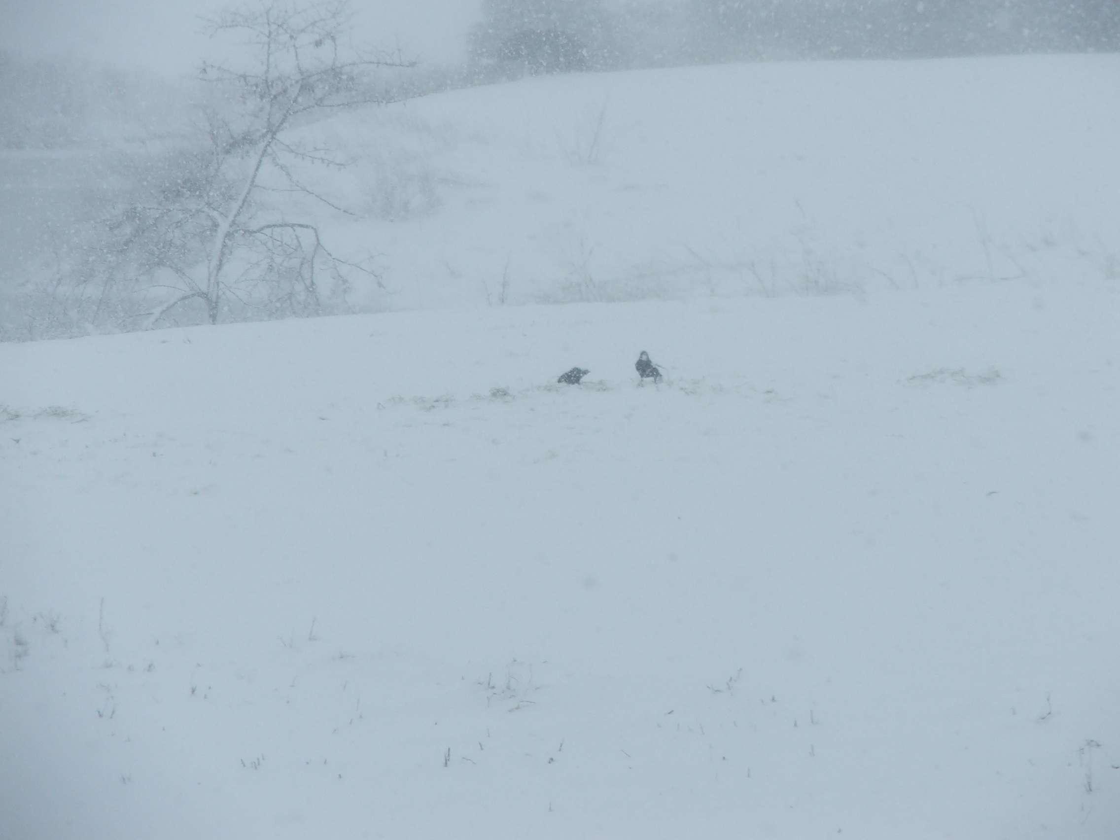 snow1002.jpg