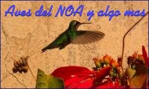 Aves del Noa
